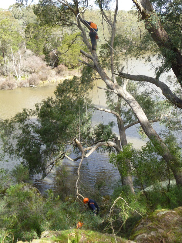 Mician tree lopping over river